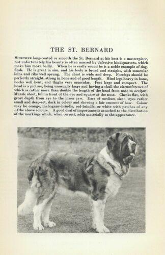 Saint Bernard - 1931 Vintage Dog Print - Breed Description - MATTED