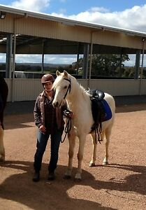 Riding Pony For Sale Bendigo Bendigo City Preview