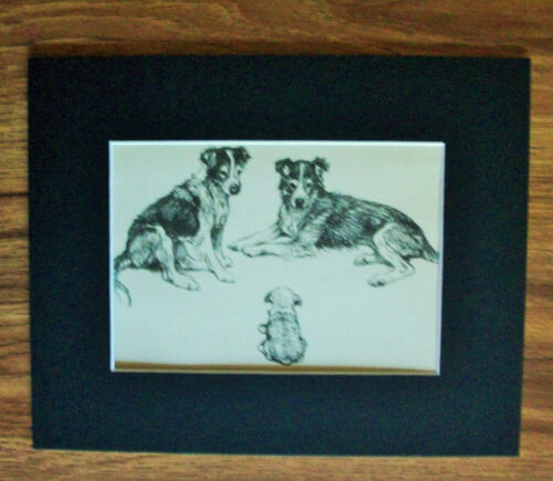 Print Sheepdog Puppy Collies Vernon Stokes 1947 Bookplate 8x10 Matted Adorable