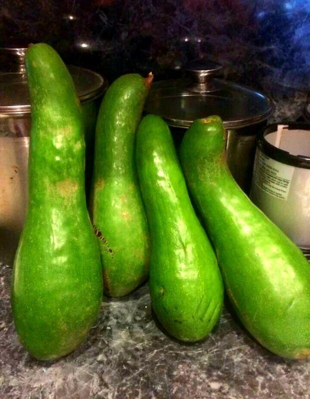 Güiro avocado 🥑 1