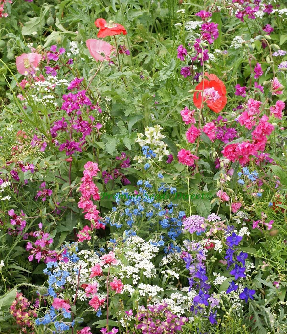 Flower mix shade native and new world annuals 25gm 18 sq meters ebay flower mix shade native and new world annuals 25gm 18 sq meters izmirmasajfo