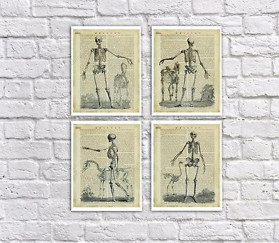 Skeleton Halloween Wall Art Set of 4 Skeleton Man Horse Ostrich vintage anatomy  ()