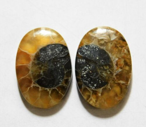 18.25 Cts Natural Ammonite (20mm X 13.7mm each) Loose Cabochon Match Pair
