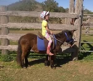 Pony for sale Moore Somerset Area Preview