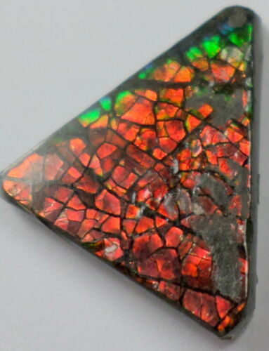 5.3 Cts Canadian Ammolite Ammonite Gemstone Red Orange Green Cabochon 16x14mm