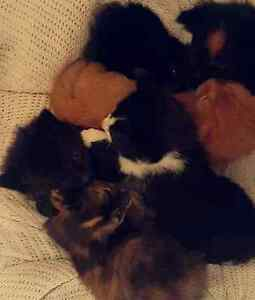 Beautiful Kittens Clayton South Kingston Area Preview