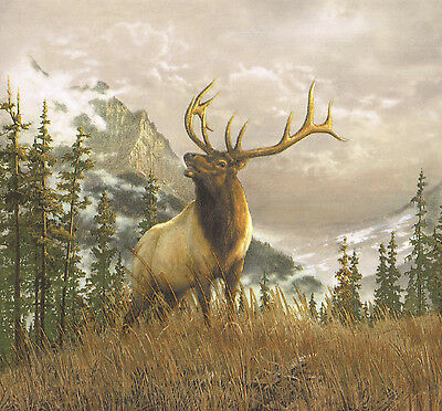 COUNTRY IN THE WILD ELK NOT DEER  MOOSE MOUNTAINS COUNTRY Wallpaper Wall bordeR