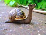 The slug that broke the camels back