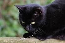 I have lovely black cats for good homes