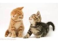 Looking kitten