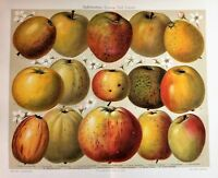 1902 Originale Cromolitografia = Apple O Mele Specie..system Diel-lucas= Etna - apple - ebay.it