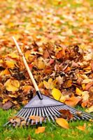 Fall Cleanup & Gutter Cleaning