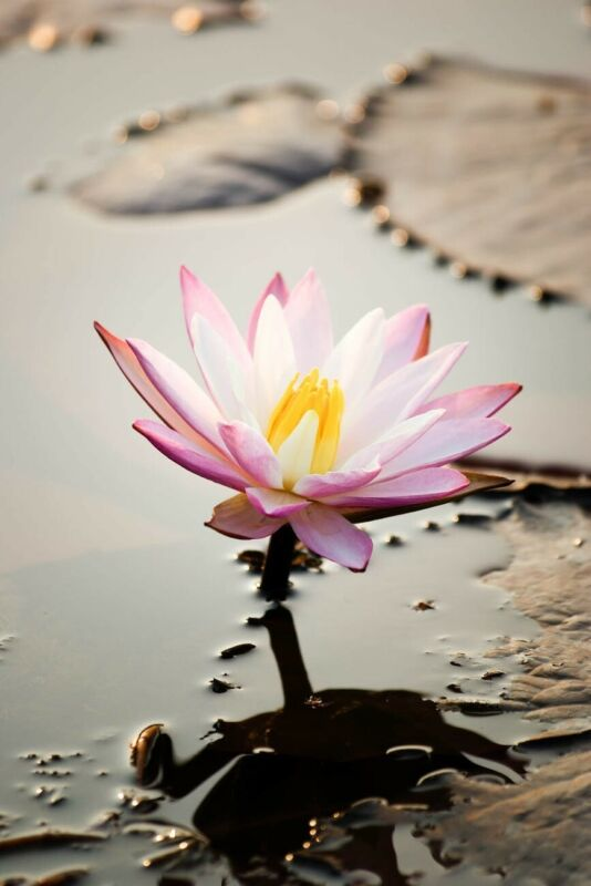 SAME DAY CLAIRVOYANT PSYCHIC MEDIUM READING, $10 FOR 10 MINUTES
