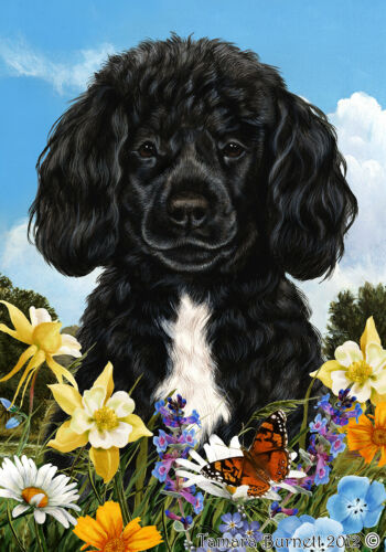 Summer House Flag - Black and White Portuguese Water Dog 18489