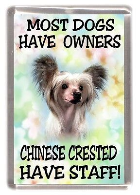 "Chinese Crested Dog Fridge Magnet "".....Chinese Crested Have Staff!"" - Starprint"
