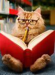 isabellerbookseller
