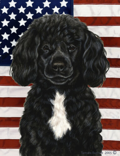 Patriotic (D2) House Flag - Black and White Portuguese Water Dog 32489