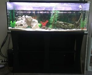 1.2m fish tank with light, filter and stand plus fish Orange Orange Area Preview