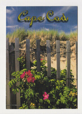Cape Cod Massachusetts Post Card shows picket fence sand tall grass and flowers Cape Cod Picket Fence