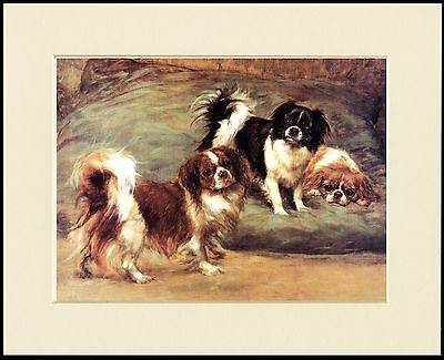 TIBETAN SPANIEL GROUP OF DOGS LOVELY DOG PRINT MOUNTED READY TO FRAME