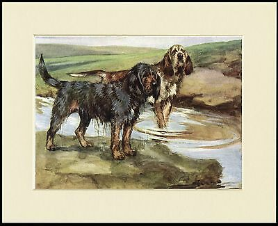 OTTERHOUND DOGS LOVELY DOG PRINT MOUNTED READY TO FRAME