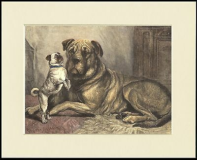 MASTIFF AND DANCING PUG LOVELY DOG PRINT MOUNTED READY TO FRAME