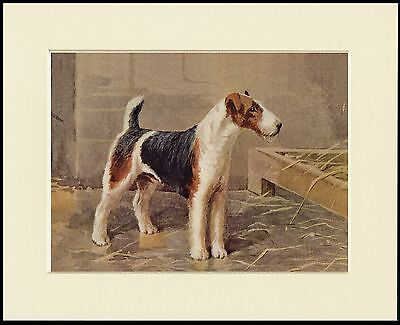 WIRE FOX TERRIER LOVELY DOG PRINT MOUNTED READY TO FRAME