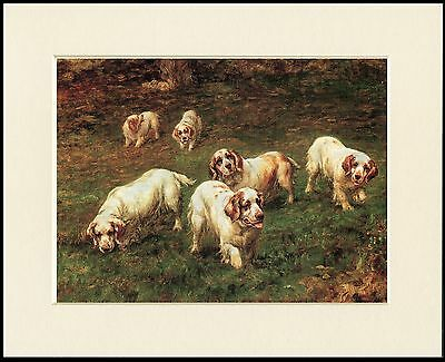 CLUMBER SPANIEL GROUP LOVELY LITTLE DOG PRINT MOUNTED READY TO FRAME