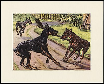 DOBERMAN PINSCHER DOGS LOVELY DOG PRINT MOUNTED READY TO FRAME