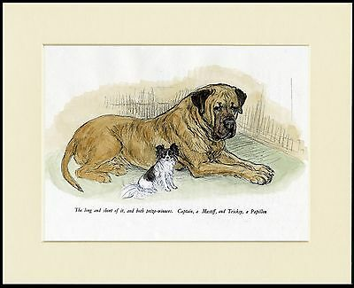 MASTIFF AND PAPILLON LOVELY DOG PRINT MOUNTED READY TO FRAME