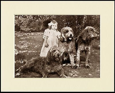 OTTERHOUND DOGS AND LITTLE GIRL CHARMING DOG PRINT MOUNTED READY TO FRAME