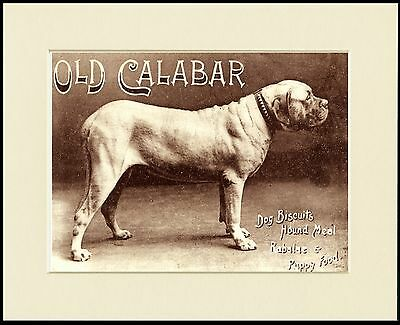 MASTIFF GREAT CALIBAR DOG FOOD ADVERT PRINT MOUNTED READY TO FRAME