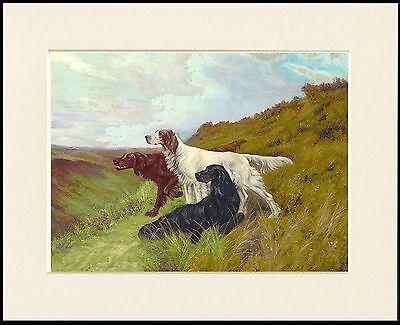 GORDON IRISH ENGLISH SETTER DOGS LOVELY DOG PRINT MOUNTED READY TO FRAME