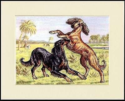 SALUKI TWO DOGS AT PLAY CHARMING  DOG ART PRINT MOUNTED READY TO FRAME