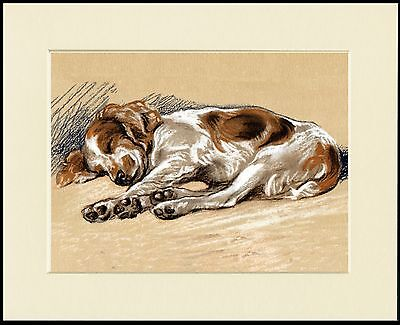 WELSH SPRINGER SPANIEL SLEEPING CHARMING DOG PRINT MOUNTED READY TO FRAME