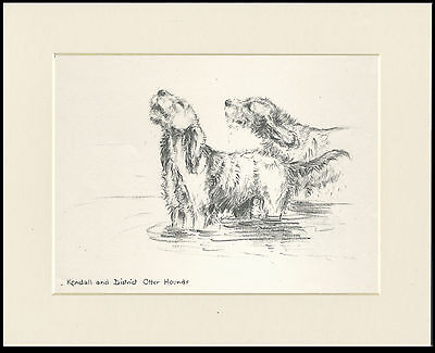 KENDALL OTTERHOUND DOGS OLD 1930'S DOG SKETCH PRINT by KF BARKER READY MOUNTED