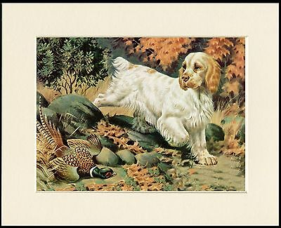 CLUMBER SPANIEL LOVELY LITTLE DOG ART PRINT MOUNTED READY TO FRAME