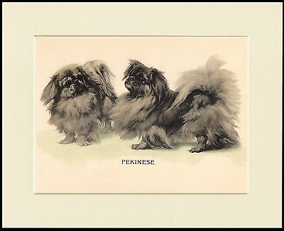 PEKINGESE TWO DOGS CHARMING LITTLE DOG PRINT MOUNTED READY TO FRAME