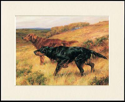 GORDON SETTER & IRISH SETTER LOVELY LITTLE DOG PRINT MOUNTED READY TO FRAME