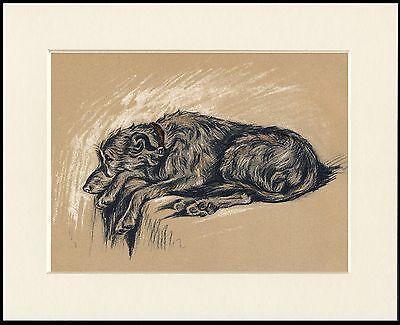 SCOTTISH DEERHOUND SLEEPING LOVELY DOG PRINT MOUNTED READY TO FRAME