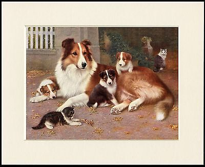 ROUGH COLLIE DOG AND PUPS LOVELY LITTLE DOG PRINT MOUNTED READY TO FRAME