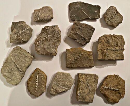 Alabama Fossil Bryozoans Archimedes in Rock Trilobite Age 1 PER PURCHASE
