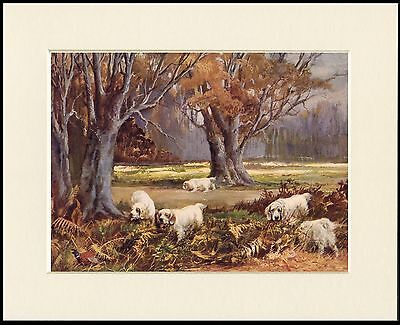 CLUMBER SPANIEL DOGS AT WORK LOVELY DOG PRINT MOUNTED READY TO FRAME