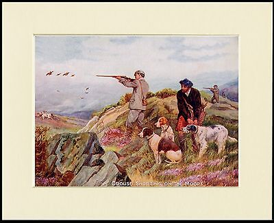 POINTER ENGLISH SETTER GROUSE SHOOTING LITTLE DOG PRINT MOUNTED READY TO FRAME