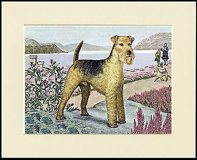 LAKELAND TERRIER LOVELY DOG PRINT MOUNTED READY TO FRAME