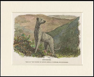 SCOTTISH DEERHOUND OLD STYLE DOG HIGHLAND SCENE DOG PRINT MOUNTED READY TO FRAME