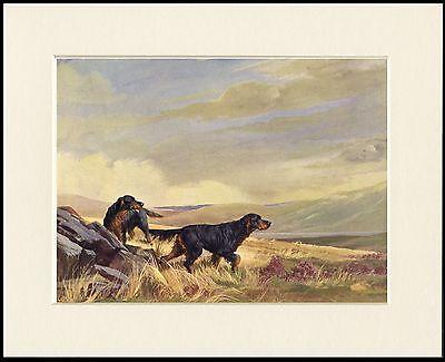 GORDON SETTER DOGS IN MOORLAND SCENE LOVELY PRINT MOUNTED READY TO FRAME