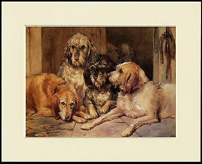 OTTERHOUND DOG GROUP LOVELY PRINT MOUNTED READY TO FRAME