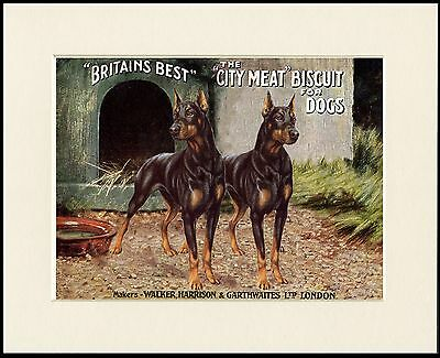 DOBERMAN PINSCHER TWO DOGS GREAT DOG ADVERT PRINT MOUNTED READY TO FRAME
