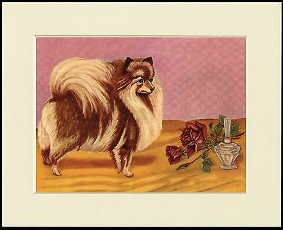 POMERANIAN LITTLE DOG AND A ROSE CHARMING PRINT MOUNTED READY TO FRAME